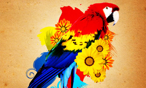 Parrot Photo Manipulation Gimp tutorial