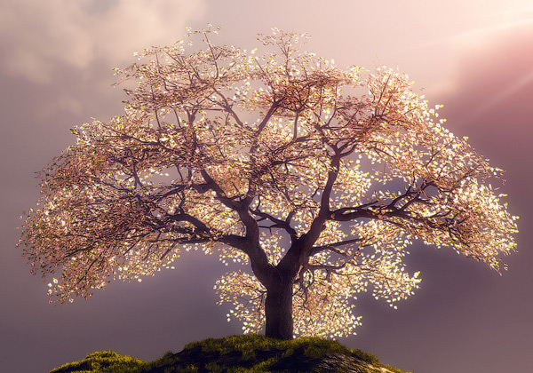 Cherry Blossom 3D Wallpaper
