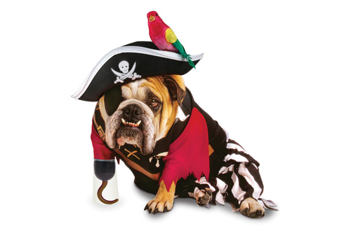 Pirate Dog Halloween Costume
