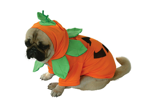 Pumpkin Dog Halloween Costume