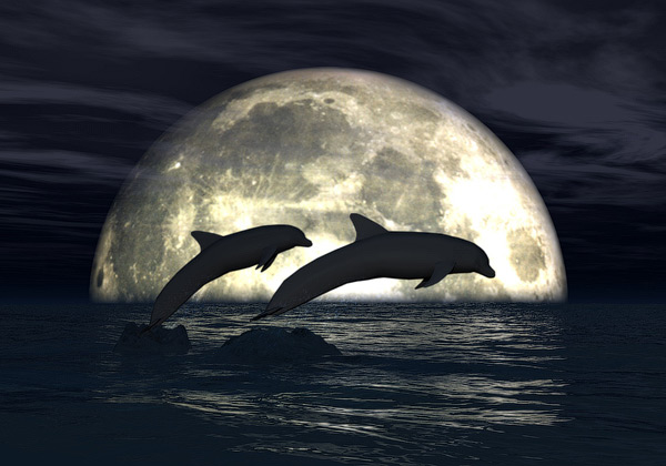 Moonlight Dolphins 3D Wallpaper