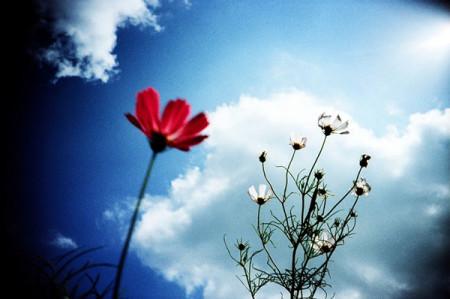 flowers-lomo