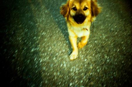 fynni-dog